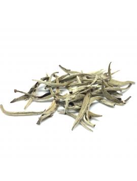 Silver Yin Zhen